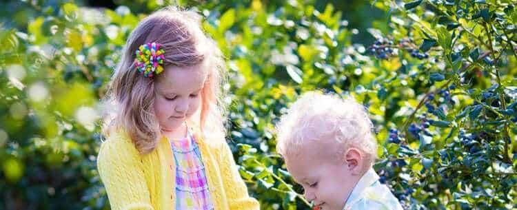 Kids Picking Florida Blueberries